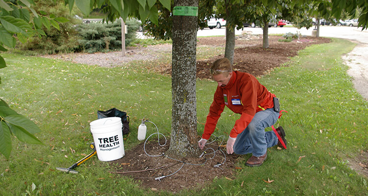 Tree services Cairns